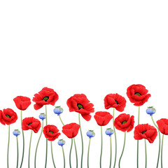 floral background with poppy flower