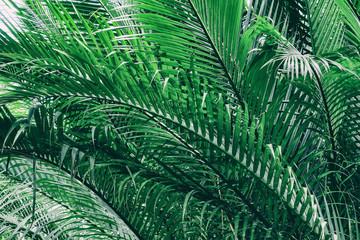 tropical palm tree, mangrove forest