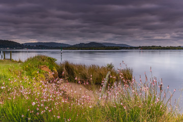 Cloudy Skies and Wildflowers Waterscape
