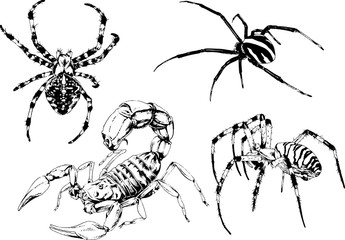 vector drawings sketches different insects bugs Scorpions spiders drawn in ink by hand , objects with no background