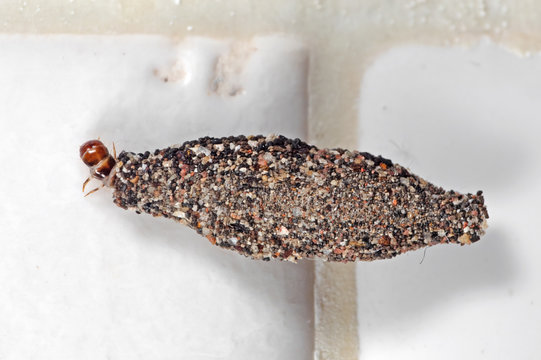 Macro Photo of Case Bearing Clothes Moth on White Wall