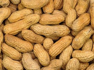 Geröstete Erdnüsse, Arachis hypogaea