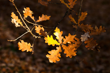 autumn, bright, beautiful, sky, leaves, red, green, yellow