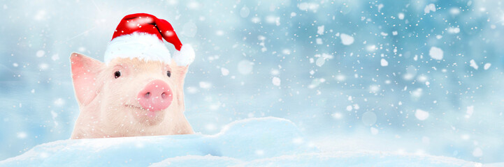 Christmas card with cute newborn santa pig piglet. Decorations symbol of the year Chinese calendar. fir background. Holidays, winter and celebration concept. Space for text
