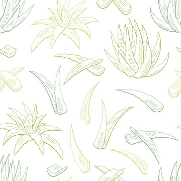 Aloe vera graphic color seamless pattern background sketch illustration vector