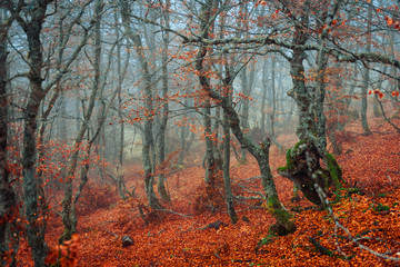 Thin trees in magnificent autumn forest