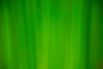 Green background. Nature concept background.