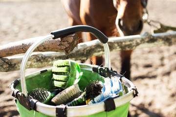 Brushes for horse care are in the basket