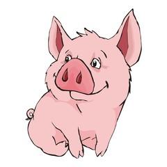pig on white background