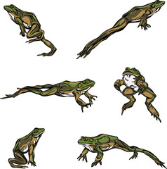 Frog, jump, options, illustration, black, color, vector