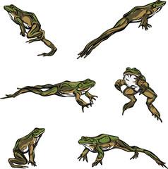 Frog, jump, options, illustration, black, color, vector