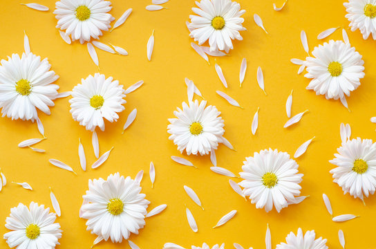 Chamomile with petals on an orange background.