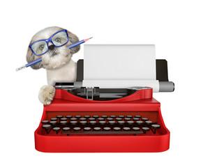 Shitzu dog is typing on a typewriter keyboard. Isolated on white