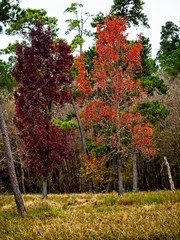 Red and Orange Fall Trees