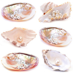 Natural pearls inside the oyster shell