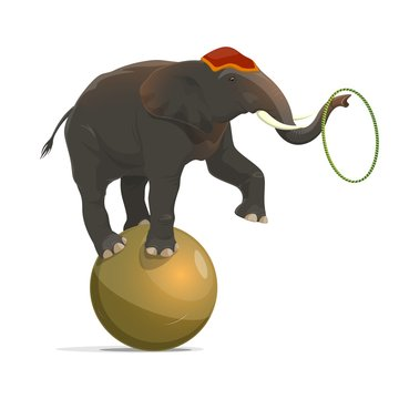 Circus elephant balancing on ball, juggling hoop