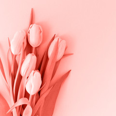 Pink tulips on the pink background. Flat lay, top view.  Valentines background. . Living coral theme - color of the year 2019