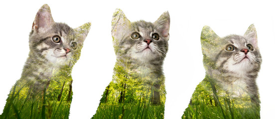 cute kittens with double exposition witn spring nature - isolated on white