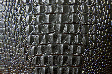 Photo sur Toile Crocodile Close up of black snake or crocodile skin texture. large scales. for decoration and design
