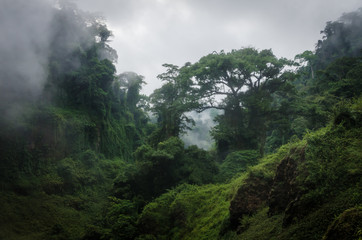 Photo sur Plexiglas Jungle Foggy overgrown hills in rainforest of Cameroon, Africa.
