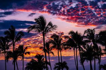 sunset with palm trees and clouds