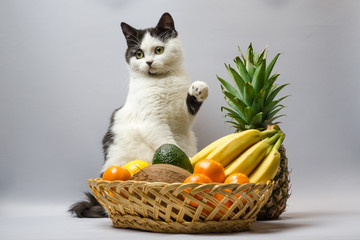 black and white fat cat raised a paw over a basket of tropical fruits