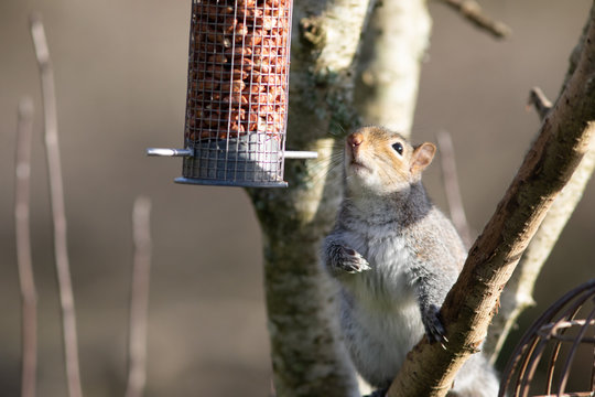 Squirrel at a feeder