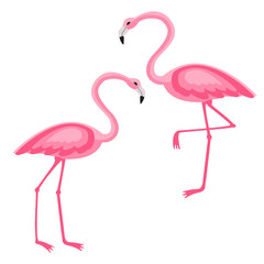 Pink Flamingo isolated vector illustration