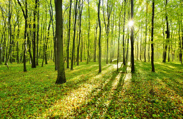 The Sun is shining through Bright Green Forest
