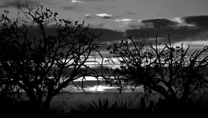 Backlit trees during the sunrise and cloudy sky in background, Black and white