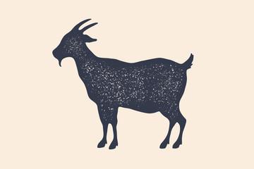 Goat. Vintage logo, retro print, poster for Butchery