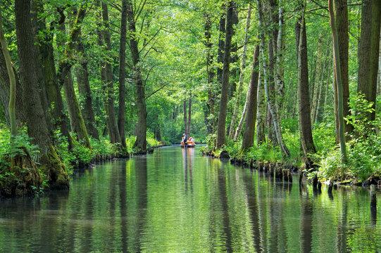 Spreewald Hochwald - Spree Forest  landscape in  Brandenburg