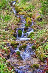 Water stream in summer forest