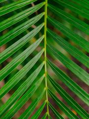 green, palms, hawaii, lush, spring, palm trees,