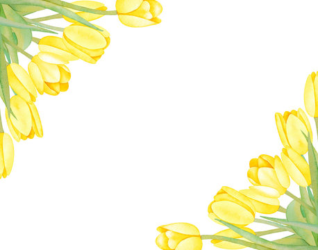 Illustartion of watercolor hand drawn frame with colorful yellow Spring tulips isolated on white background. Vintage Card, wedding invitation, background with floral elements for text. Summer.