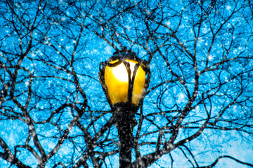 Lamp post and tree branches as snow falls at night