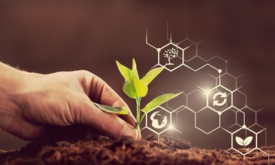 Fototapeta Green plant in human hand on background obraz