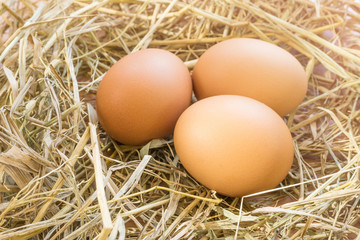 Close up chicken eggs on straw with wooden .Fresh eggs from farm for cooking with blurred background