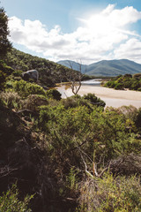Plants by river in forest at Wilsons Promontory National Park