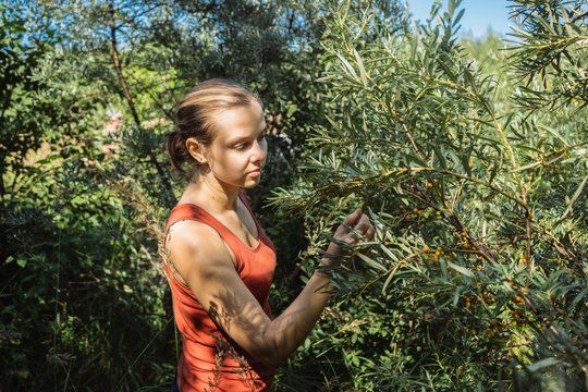 Young woman picking berries from plants on farm