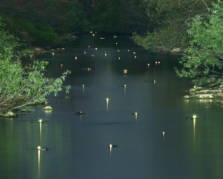 Glowing alligators eyes in swamp at forest during dusk