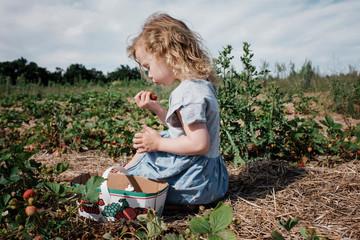 Girl eating strawberries in field