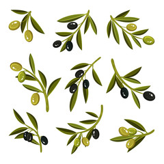 Flat vector set of small sprigs with leaves, green and black olives. Natural and healthy product. Organic food