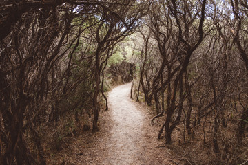 Footpath amidst trees in forest at Wilsons Promontory National Park