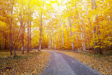 Fall background.  Autumn country road color tour.  Bright and cozy warm.  Wishfull happiness.