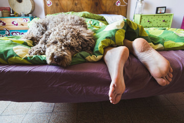woman feet on the bed with dog