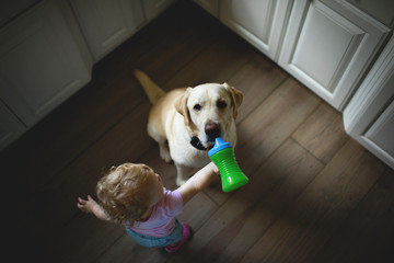 High angle view of baby girl feeding drink to dog while standing on hardwood floor in kitchen at home