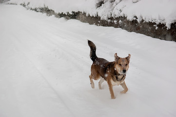 Homeless dog alone in the snowing winter park. Selective Focus.