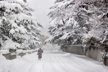 Blizzard, strong snowstorm, snow-covered trees. A silhouette lone woman walking along a forest road under the winter snowstorm
