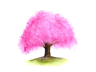 watercolor pink tree cherry blossom or sakura abstract isolated on white background.hand drawn.